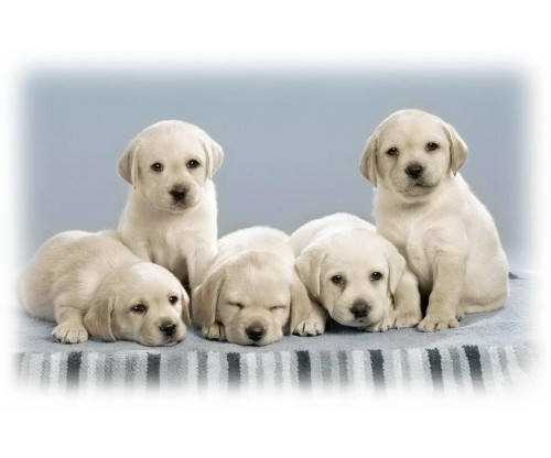Just Cute - Puppies