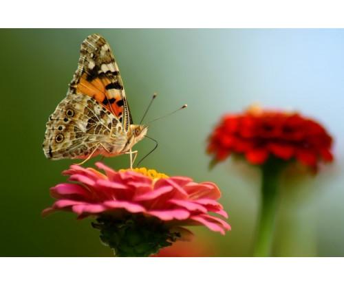 Aura - Yellow Butterfly