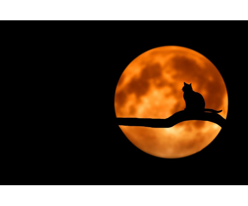 Black Cat With Yellow Moon