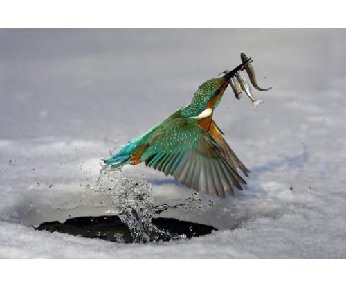 Preying Bird