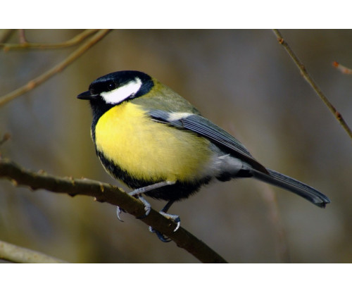 Beautiful Bird 4