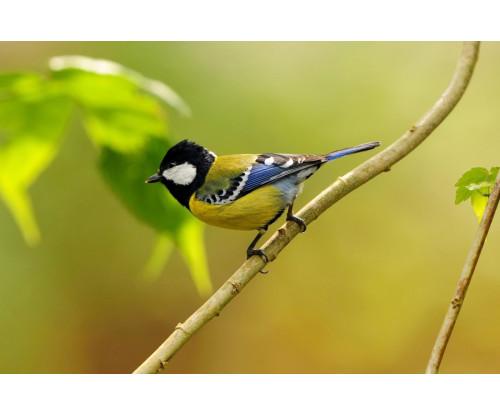 Beautiful Bird 12
