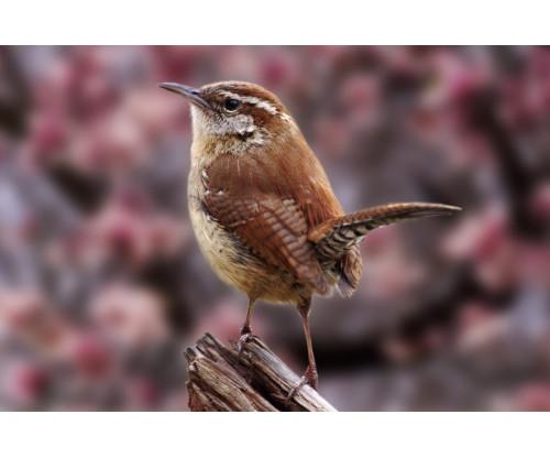 Beautiful Sparrow 3