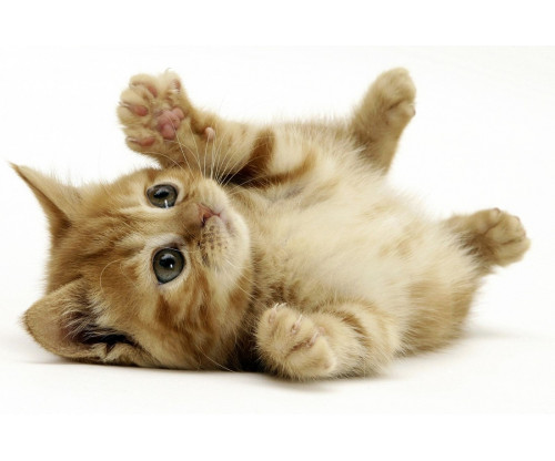 Cute Cat 2