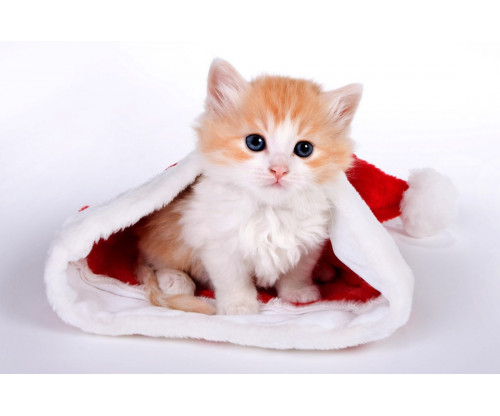 Just Cute - Christmas Cat