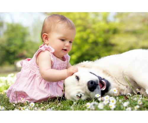 Child's Love - Cute Girl Playing With Dog