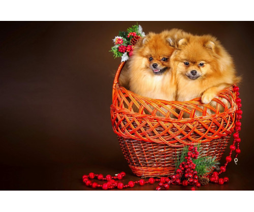 Two Cute Puppies In A Bucket