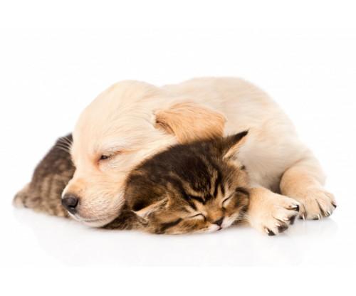 Cute Friendship Sleeping Dog And Cat