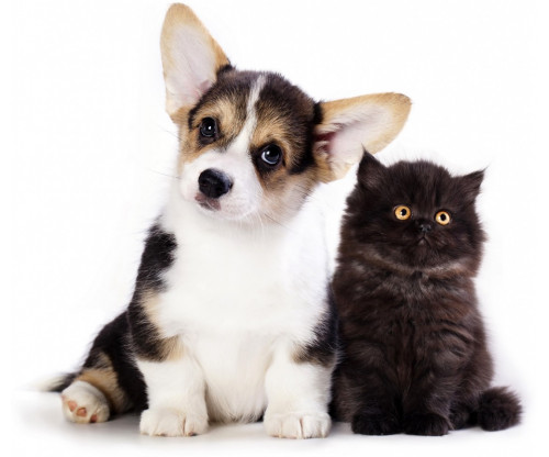 Cute Dog And Cat Friendship