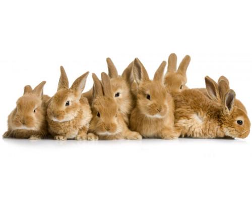 Lots Of Rabbits