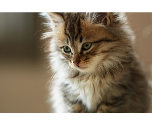 Deep Eyes Cat
