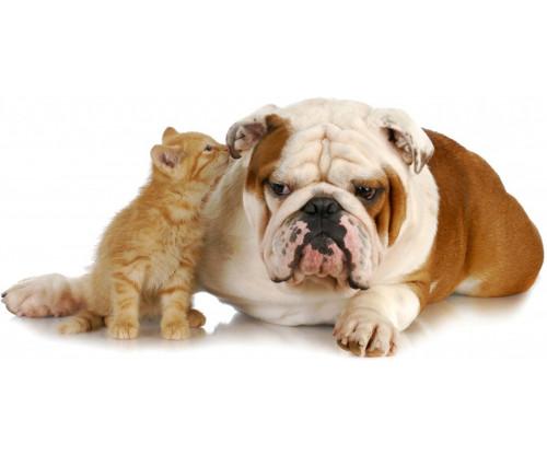 Cute Bulldog With Cat