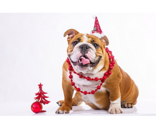 Cute Dog In Christmas Hat