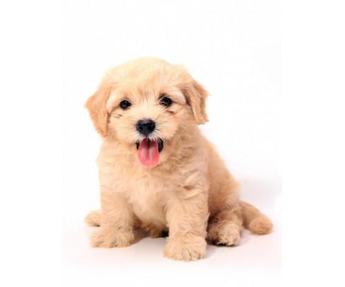 Cute Puppy 3