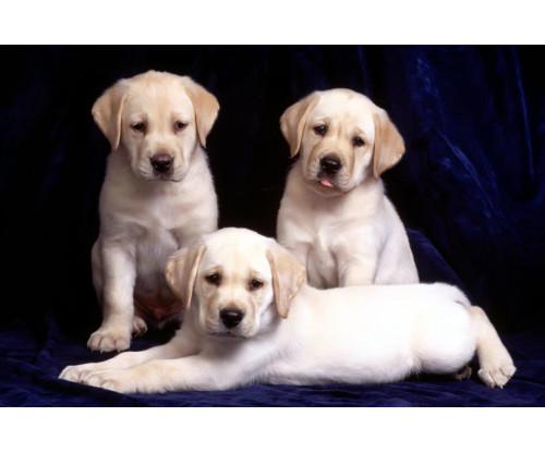 Cute Puppies 5
